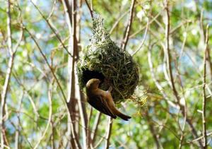 Pelajaran berharga dari Sarang Burung