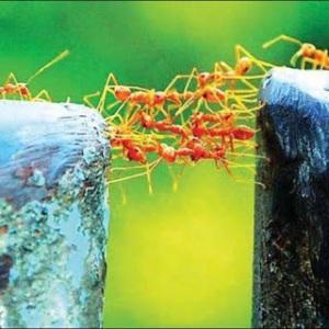 Belajar dari Seekor Semut
