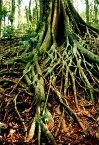 Belajar dari akar pohon