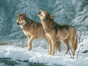 2 ekor Serigala