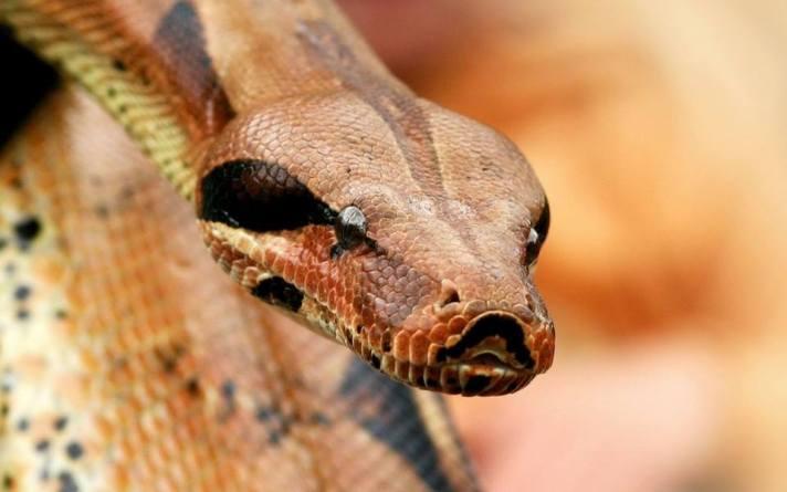 marah dan putus asa (belajar dari ular)