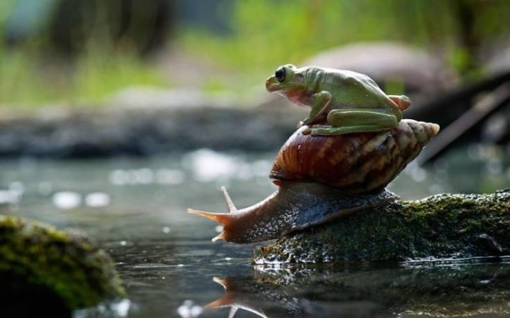 katak dan siput