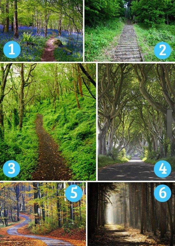 jalan di hutan